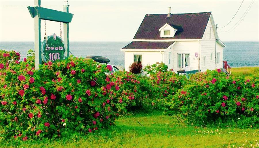 cottage rental Gaspésie, Cap-des-Rosiers (pic-10)