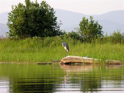 chalet à louer Estrie/Cantons-de-l'est, Lac-Mégantic (pic-3)