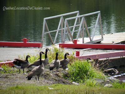 chalet à louer Bas Saint-Laurent, Lac-des-Aigles (pic-3)