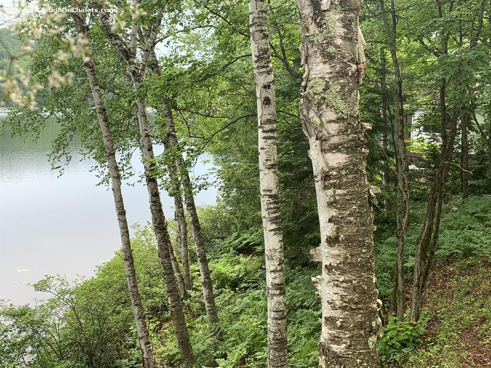 chalet à louer Laurentides, Amherst (pic-5)